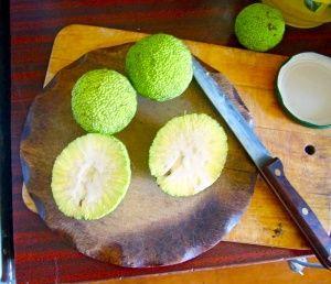 приготовление мази из адамова яблока