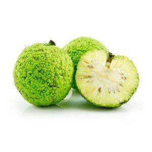 Плод адамова яблока