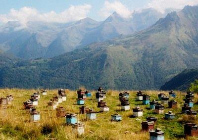 Производство горного меда