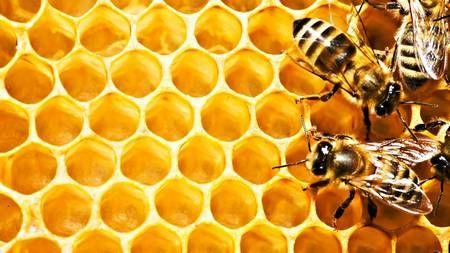 Как отличить настоящий мед