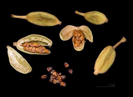 Кардамон фото семена
