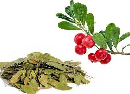 Свежее и сушеное растение