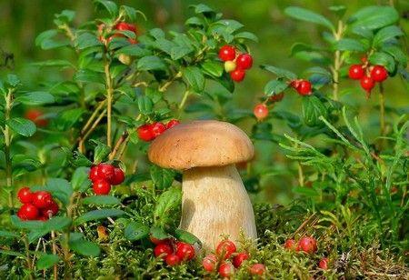 Ягоды и гриб
