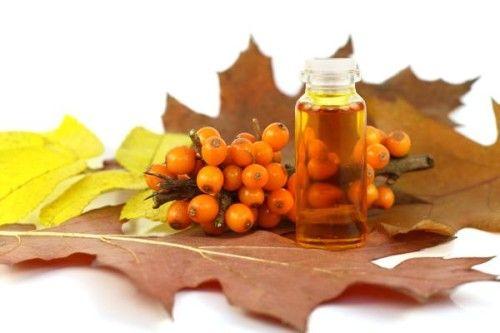 Листья, ягоды и масло облепихи