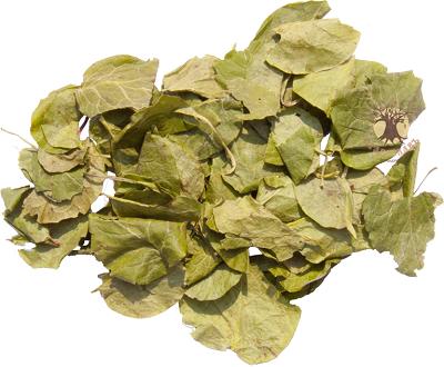 Сушеный лист грушанки