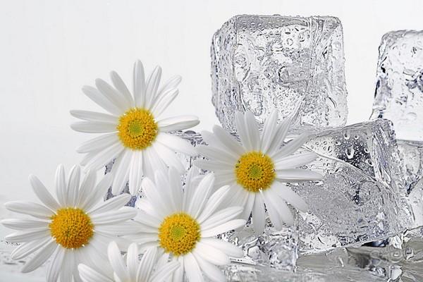 Лёд для лица ромашка