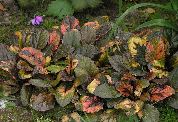 Листья удивительного окраса