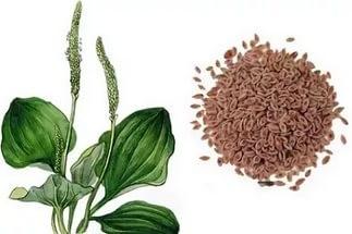 Растение и его семена