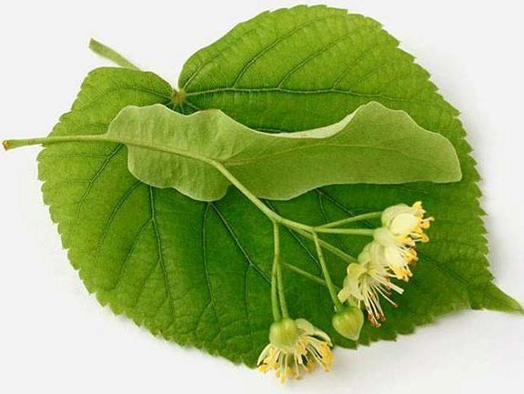 Лист и цветок растения