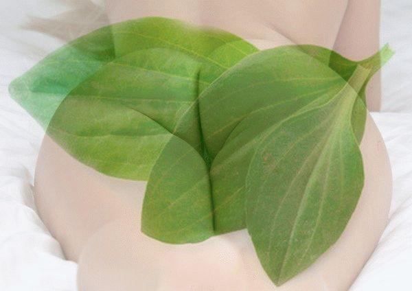 Растение имеет богатый состав