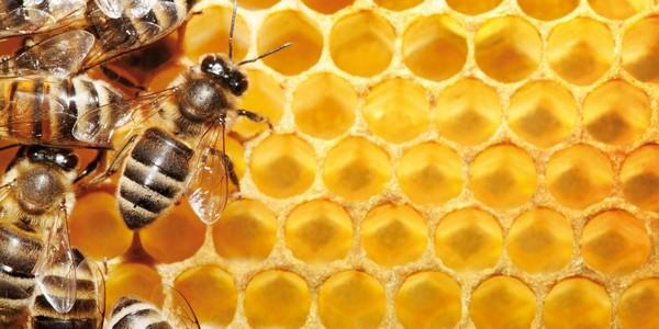 Пчелы и соты