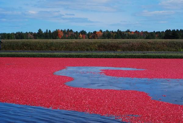 Хранение ягод в воде