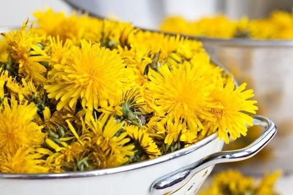 Сорный цветок в народной медицине