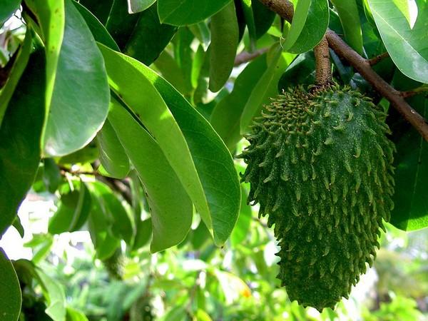 Экзотический плод