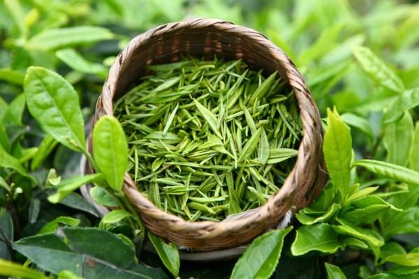 Чайные листья