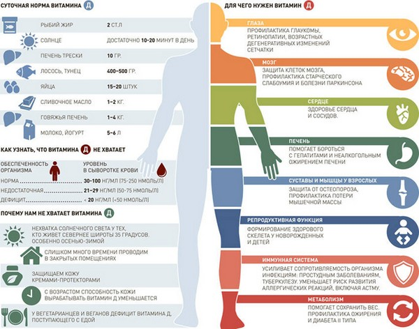 Влияние витамина Д - схема