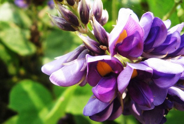 Роскошный цветок