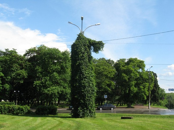 Растение обвило столб
