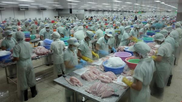 Промышленная заготовка рыбы