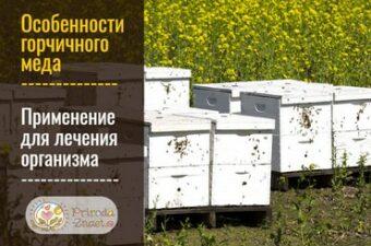 Горчичный мед