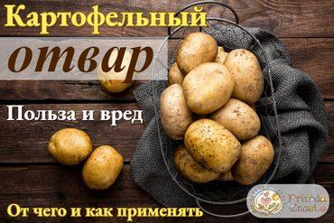 Отвар из картофеля в народной медицине