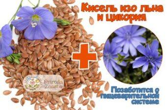 Семя и цветы льна