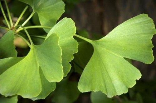 Лист растения