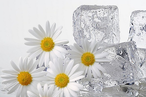 Лед из ромашки для лица