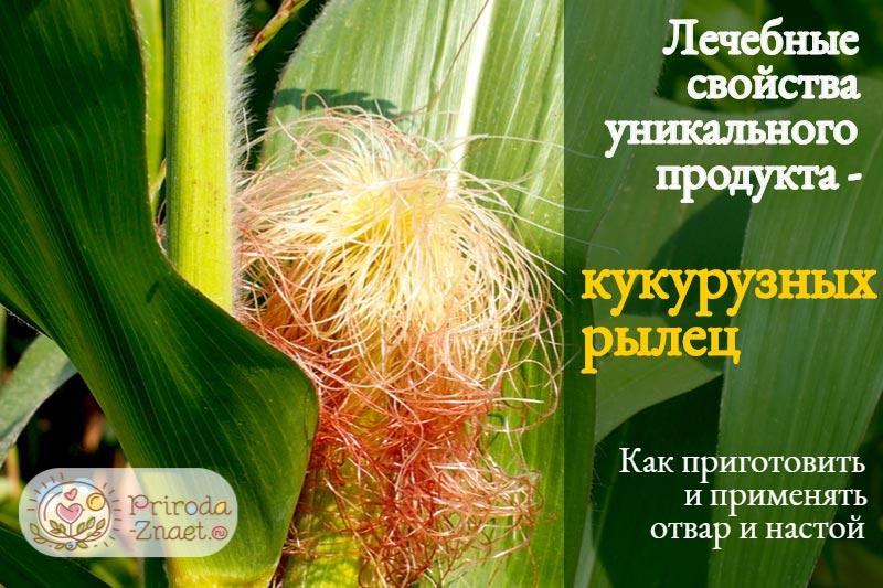 Рыльца кукурузы широко используются в народной медицине