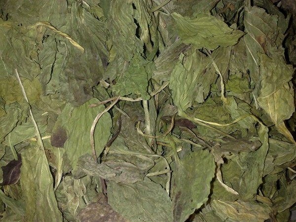 Собранные листья сохнут