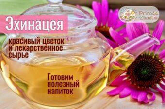 Чай с эхинацеей