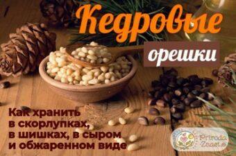 Орехи и шишки кедра