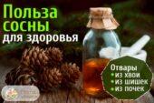 Сосновые препараты очень полезны и просты в приготовлени