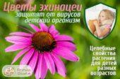 Красавица эхинацея – помощник для детского иммунитета