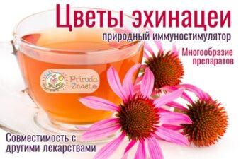 Эхинацея пурпурная нашла широкое применение в классической и народной медицине