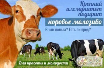 Коровье молозиво