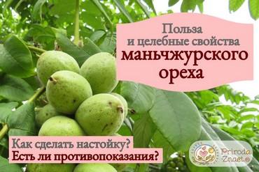 Маньчжурский орех является ближайшим родственником грецкого ореха