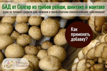 Грибы - сырье для изготовления экстракта от Солгар